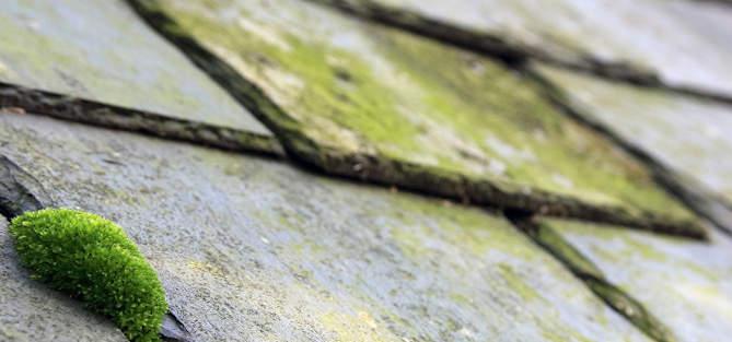 nettoyage toiture La Courneuve